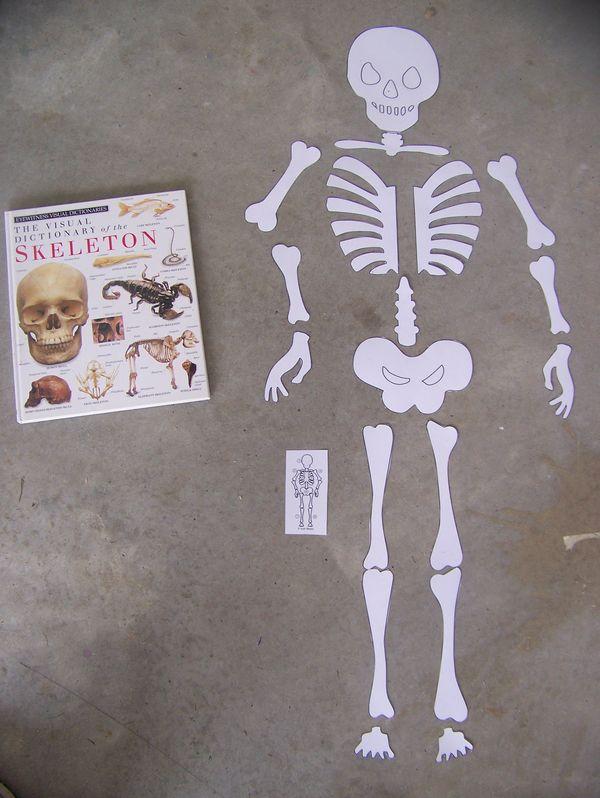 human body unit wrap-up - homeschooling x3, Skeleton