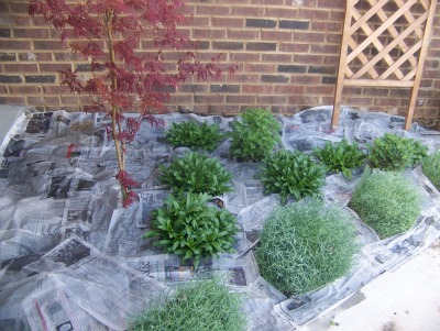 Gardening with newspaper weed control
